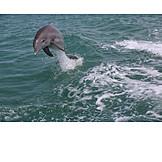 Jump, Dolphin
