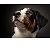 Dog, Dog portrait