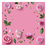 Copy space, Flowers, Flower frame