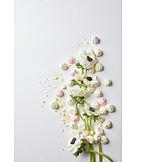 Anemone, Floral, Floristry