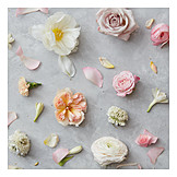 Flowers, Romantic, Pastel tones