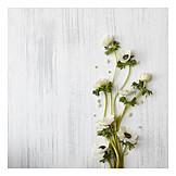 Copy space, Anemone, Flower arrangements
