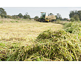 Agriculture, Combine, Hay