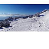 Winter sport, Skiing, Slope