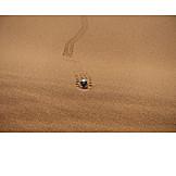 Desert, Black beetle