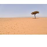 Tree, Desert