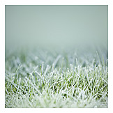 Grass, Frost, Rime