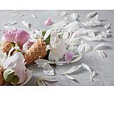 Petals, Summer, Pastel