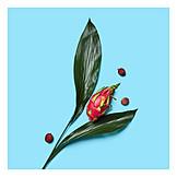 Lychee, Tropical fruit, Dragon fruit