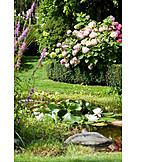 Garden, Garden plants, Garden pond