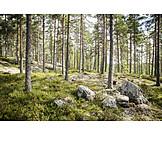 Coniferous, Finland