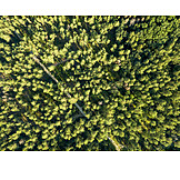 Deciduous forest, Green lung