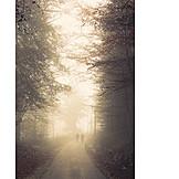 Fog, Autumn forest, Walk
