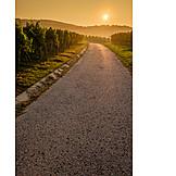 Dirt, Vines, Cultural landscape
