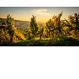 Sunset, Vineyard
