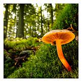 Mushroom, Lamella