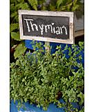 Thyme, Thyme, Fresh herbs