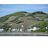 Rhine river, Rüdesheim am rhein, Assmannshausen