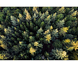 Forest, Spruce forest, Bee