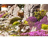 Rock garden, Aubrieta