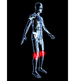 Research, Knee, Inflammation, Physiology