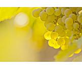 Backlighting, Grapes