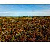 Forest, Autumn forest, Autumn colors