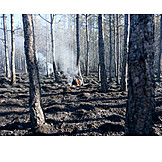 Forest fire, Natural disaster, Global warming