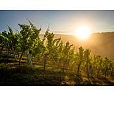 Sunrise, Vineyard