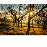 Sunrise, Morning light, Orchard meadow