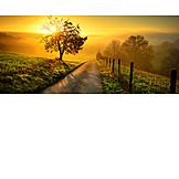 Sunrise, Footpath, Meadow, Haze